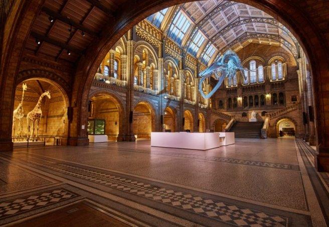 natural-history-museum-interiors-cultural_dezeen_2364_col_0-852x590